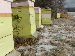 Ice covered hives