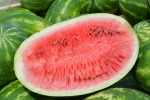 Organic Watermelons in Season